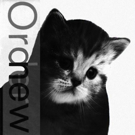 Διάσημα εξώφυλλα δίσκων... με γάτες! (1)