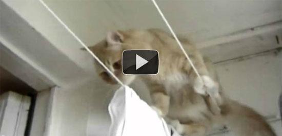 Γάτα ακροβάτης με επεισοδιακό φινάλε