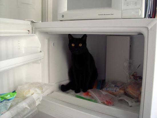 Γάτες (2)