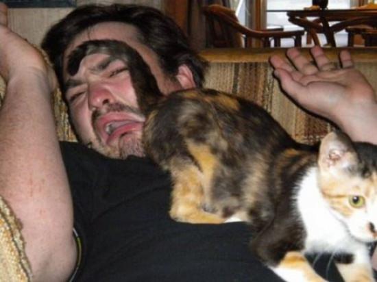 Γάτες (5)