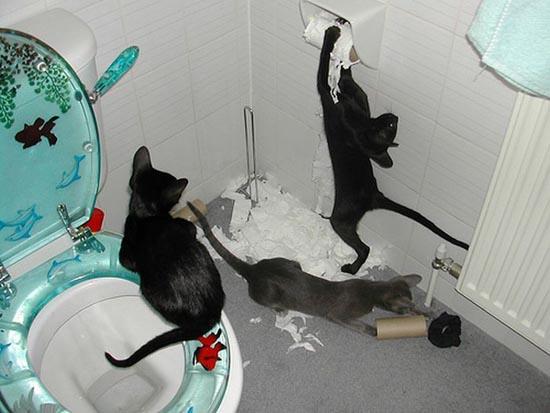 Γάτες (7)