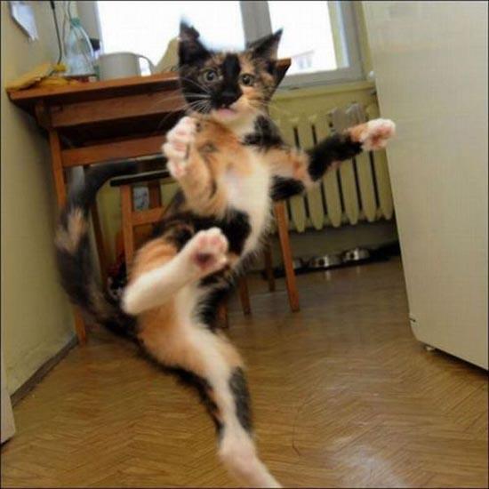 Γάτες (8)