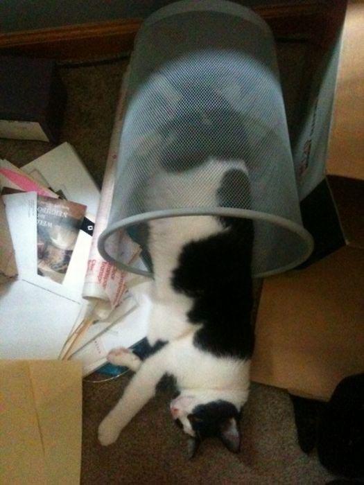 Γάτες (14)