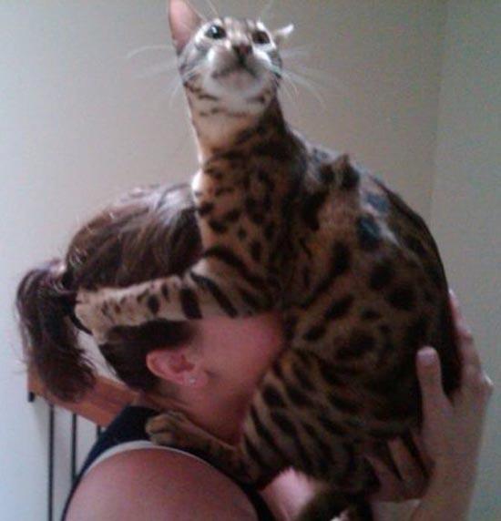 Γάτες (19)