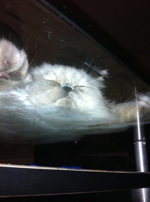 Γάτες πάνω σε γυαλί (19)