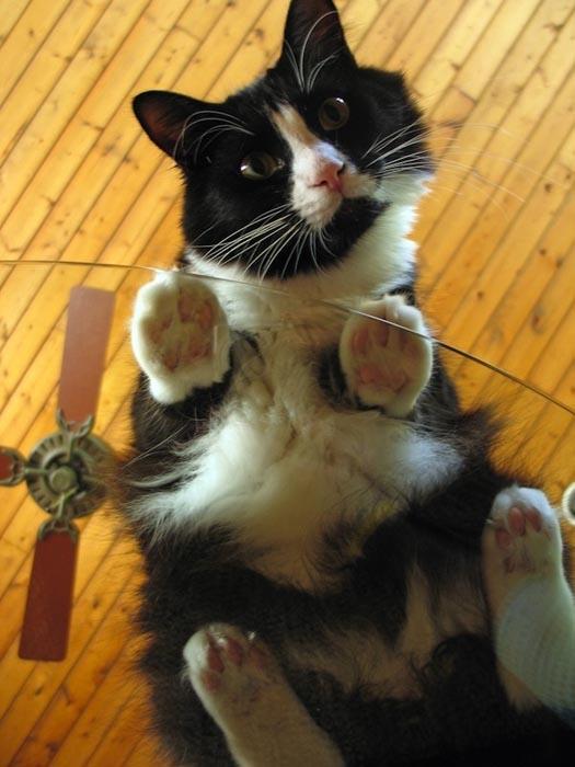 Γάτες πάνω σε γυαλί (18)