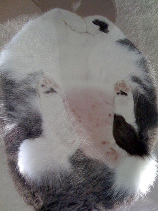 Γάτες πάνω σε γυαλί (17)