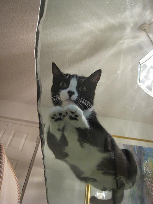 Γάτες πάνω σε γυαλί (16)