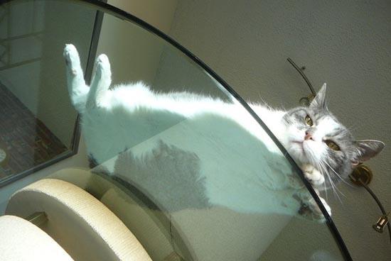 Γάτες πάνω σε γυαλί (15)