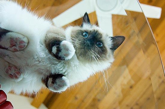 Γάτες πάνω σε γυαλί (13)