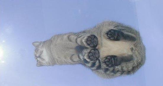 Γάτες πάνω σε γυαλί (12)