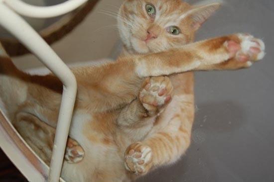 Γάτες πάνω σε γυαλί (10)