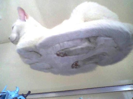 Γάτες πάνω σε γυαλί (8)