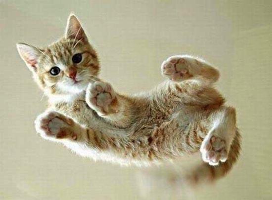 Γάτες πάνω σε γυαλί (7)