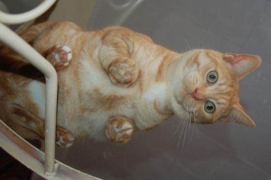 Γάτες πάνω σε γυαλί (5)