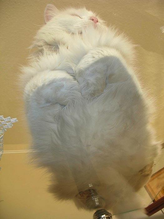 Γάτες πάνω σε γυαλί (4)