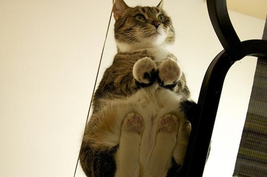 Γάτες πάνω σε γυαλί (3)