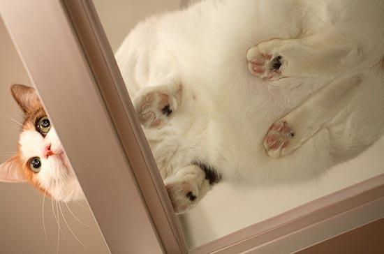 Γάτες πάνω σε γυαλί (2)