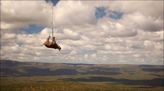 Ιπτάμενοι ρινόκεροι (1)