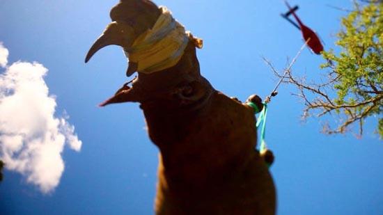 Ιπτάμενοι ρινόκεροι (8)