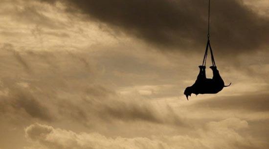 Ιπτάμενοι ρινόκεροι (9)