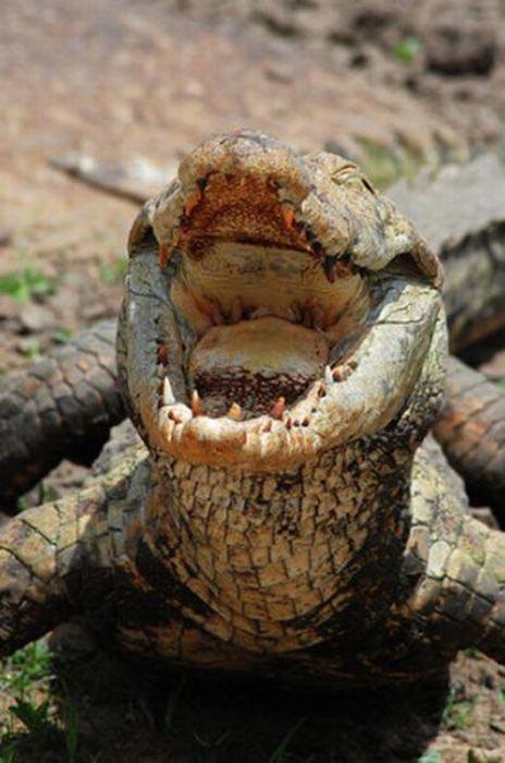 Paga Crocodile Pond (3)