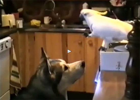 Παπαγάλος μοιράζεται μακαρονάδα με σκύλο