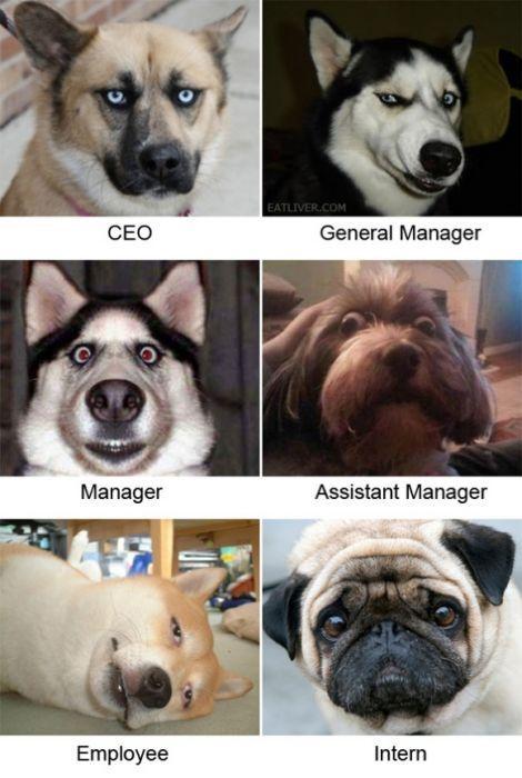 Φωτογραφία της ημέρας: Αν τα στελέχη μιας εταιρείας ήταν σκύλοι