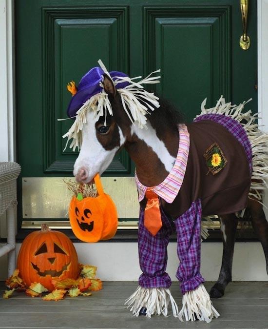 Τα πιο δυστυχισμένα άλογα του κόσμου (17)