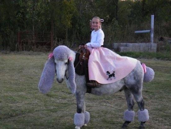 Τα πιο δυστυχισμένα άλογα του κόσμου (16)