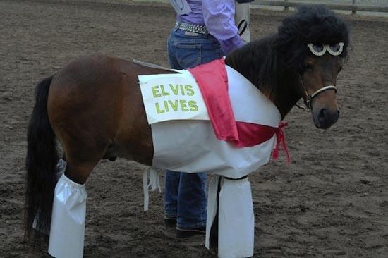 Τα πιο δυστυχισμένα άλογα του κόσμου (7)