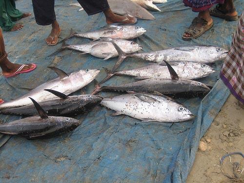 Ψαράδες στη Σομαλία (21)