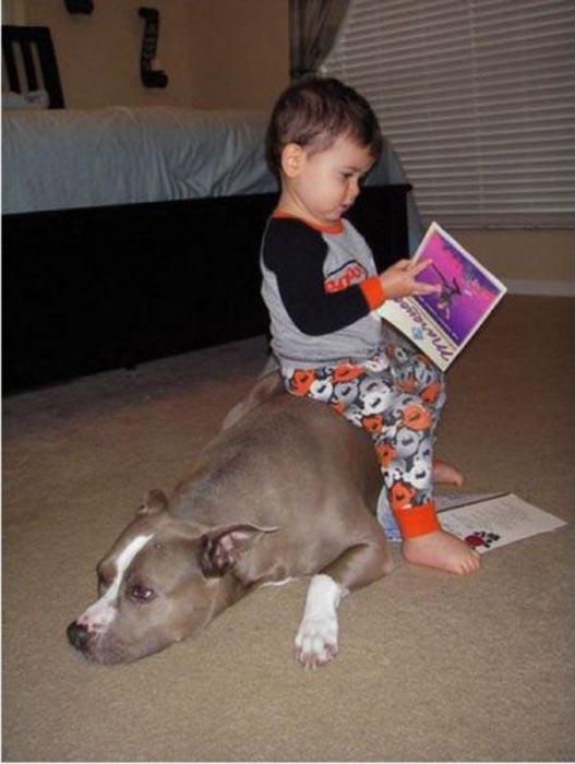 Σκύλοι & Γάτες με παιδιά: Ποιος κάνει κουμάντο; (1)