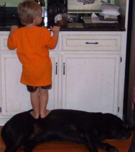 Σκύλοι & Γάτες με παιδιά: Ποιος κάνει κουμάντο; (2)