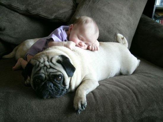 Σκύλοι & Γάτες με παιδιά: Ποιος κάνει κουμάντο; (3)