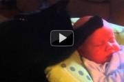 Γάτα νανουρίζει μωρό που κλαίει