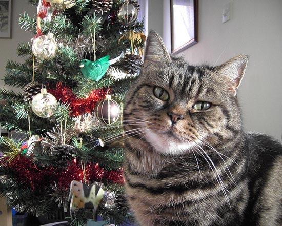 Γάτες που μισούν τα Χριστούγεννα (2)
