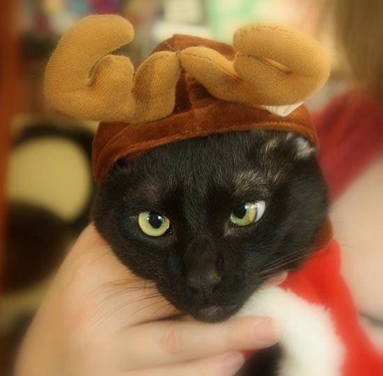 Γάτες που μισούν τα Χριστούγεννα (4)