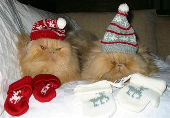 Γάτες που μισούν τα Χριστούγεννα (5)