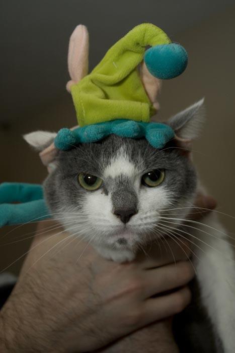 Γάτες που μισούν τα Χριστούγεννα (6)