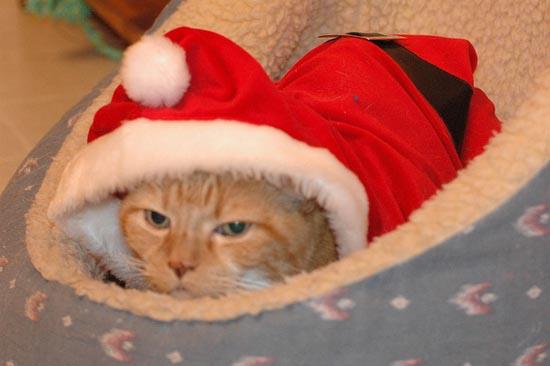 Γάτες που μισούν τα Χριστούγεννα (7)