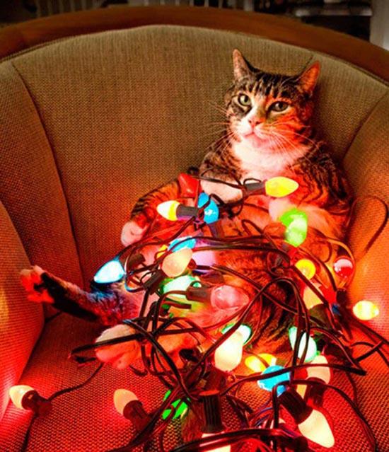 Γάτες που μισούν τα Χριστούγεννα (8)