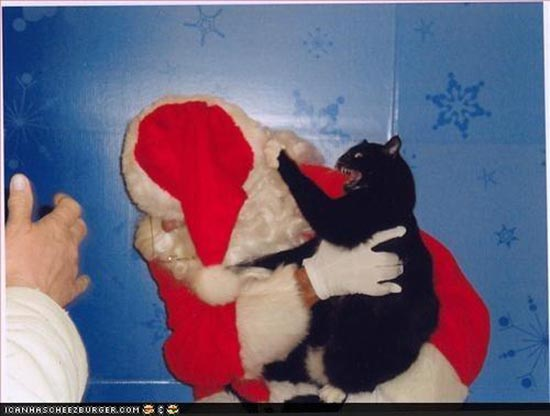 Γάτες που μισούν τα Χριστούγεννα (13)