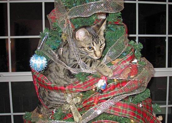 Γάτες που μισούν τα Χριστούγεννα (16)