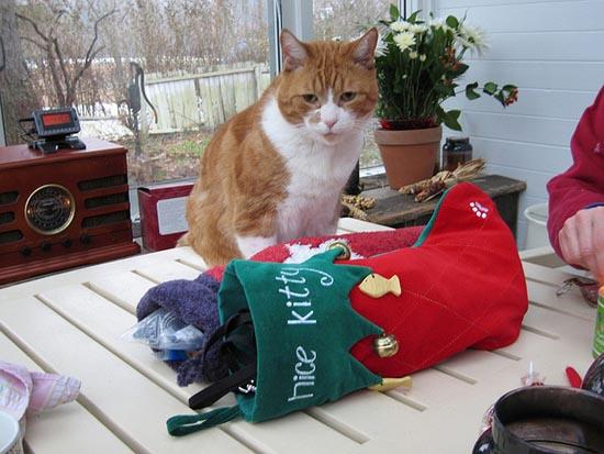 Γάτες που μισούν τα Χριστούγεννα (18)