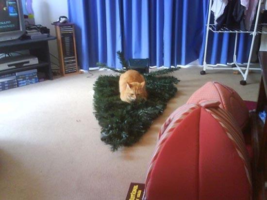 Γάτες που μισούν τα Χριστούγεννα (19)