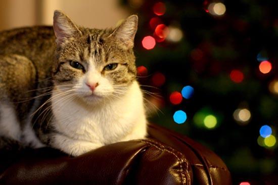 Γάτες που μισούν τα Χριστούγεννα (20)