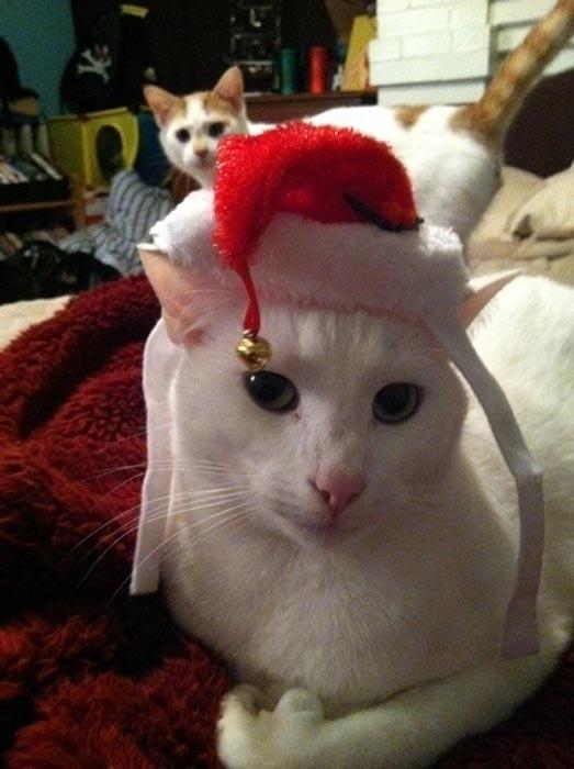 Γάτες που μισούν τα Χριστούγεννα (21)