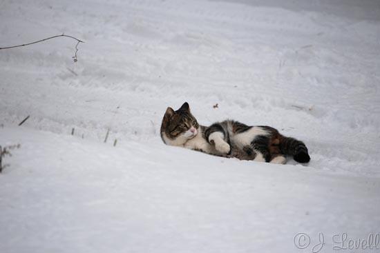 Γάτες στο χιόνι (25)