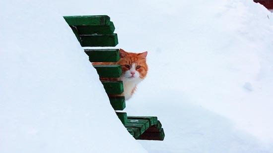 Γάτες στο χιόνι (21)